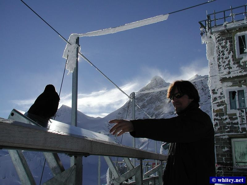 Nelson and black bird at Jungfraujoch, Suisse.