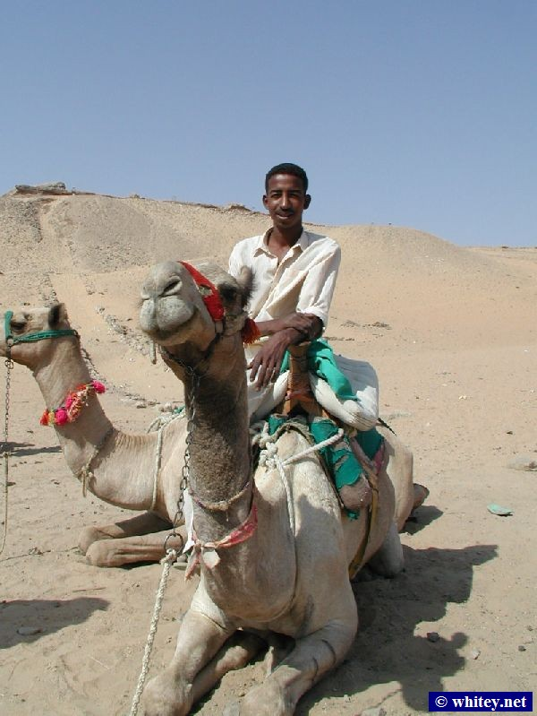 One of our camel guides and some camels, Western Desert, Сахара.